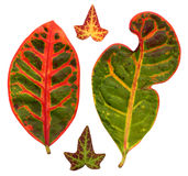 Leafage. List of flowers of different shapes and colors Stock Photos