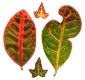 Leafage illustrazione di stock
