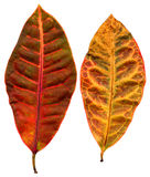 Leafage. List of flowers of different shapes and colors Stock Images