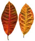 Leafage illustrazione vettoriale