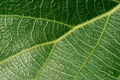 Leafage Royalty Free Stock Image