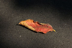 A leafage. On the black floor Royalty Free Stock Photography