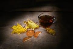 Leafage d'automne avec le thé chaud dans la tasse en verre Photos libres de droits