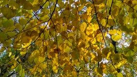 Leafage do outono Imagem de Stock