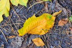 Leafage do outono Fotografia de Stock