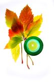 Leafage of wild grape. On white background Stock Photography