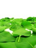 leafbana Royaltyfri Foto