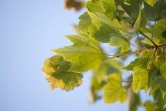 LeafCloseupsikt Arkivbild