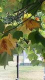 Leafdom Lizenzfreie Stockfotos