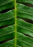 Leafe植物纹理背景 库存图片