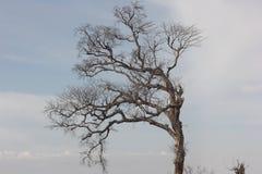 Leafe mindre träd royaltyfri bild