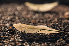 Leafe su terra Fotografia Stock
