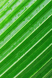 leafen gömma i handflatan Royaltyfria Bilder