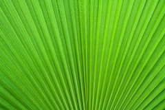 leafen gömma i handflatan Royaltyfria Foton