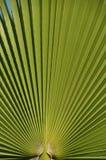 leafen gömma i handflatan Arkivfoton