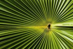leafen gömma i handflatan Arkivbild