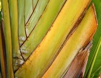 leafen gömma i handflatan handelsresande Royaltyfri Bild