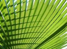 leafen gömma i handflatan textur Royaltyfria Foton
