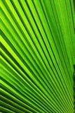 leafen gömma i handflatan texturtreen Royaltyfria Foton