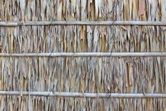 leafen gömma i handflatan texturväggen Royaltyfri Foto