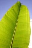 leafen gömma i handflatan Arkivbilder