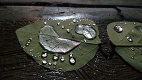 Leafen med bevattnar tappar Royaltyfri Foto