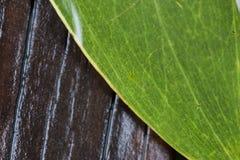 Leafen med regnar tappar arkivfoton