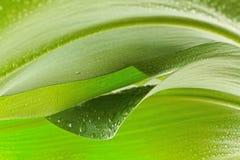 Leafen med tappar royaltyfria bilder