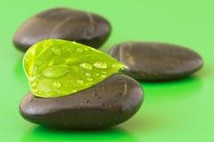 leafen stenar zen Fotografering för Bildbyråer