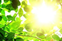 leafes зеленого цвета дня ветви солнечные Стоковая Фотография