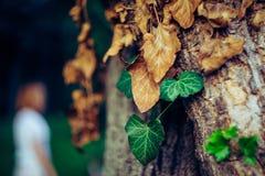Leafes природы в парке Кэрола Стоковая Фотография