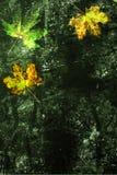 黑暗的渐近的纸张和槭树leafes 库存图片