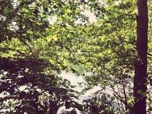 Leafes lizenzfreie stockbilder