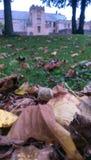Leafes da queda Imagens de Stock