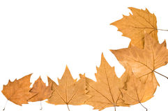 leafes del Plano-árbol Foto de archivo