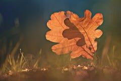 Leafes del roble en el bosque del otoño Fotos de archivo libres de regalías