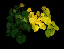 Leafes dell'estremità dell'estate Fotografie Stock Libere da Diritti