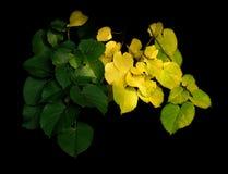 Leafes Ende des Sommers Lizenzfreie Stockfotos