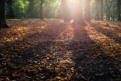 Leafes iluminados por el sol del otoño Fotografía de archivo libre de regalías