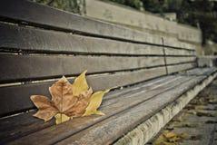 Leafes på en wood banch Arkivfoton