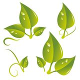 Leafes Royalty Free Stock Images