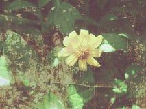 Leafes und gelber Blumen-Effekt Stockbilder
