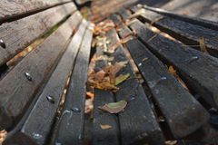 Leafes on a wood banch. Lonely leafes on a wood banch Royalty Free Stock Image