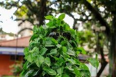 Leafesmodel in zonnebril Stock Afbeelding