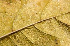leaffuktighet Arkivfoto