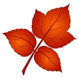 leafhallon Arkivbilder