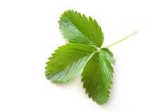 leafjordgubbe Arkivfoton