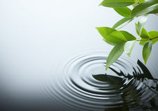 leafkrusningsvatten Arkivfoton