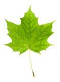 leaflönn