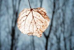 leaflampa Fotografering för Bildbyråer